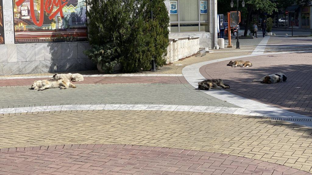 Бездомни кучета